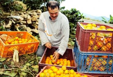 Productores agropecuarios de Caldas
