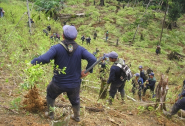 Cultivos ilícitos en Putumayo