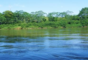 reforestación en Caquetá