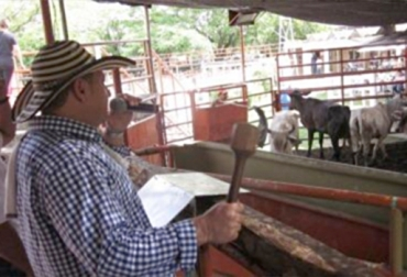 Remates de ganado