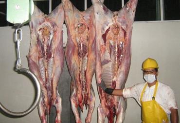 Sacrificio de ganado