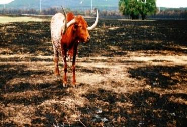 Las fincas Puerto Arturo, Tocaima y El Paraíso, fueron los predios que sufrieron el incendio. Foto: Archivo.