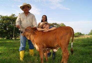 Entrega de vacas de Fundagán en la Guajira