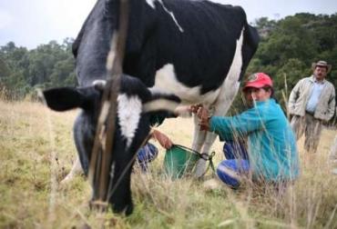 Soluciones a la crisis láctea en Boyacá