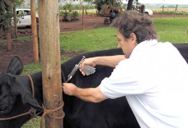 En total, 1.200 dosis se han impuesto en los corregimientos de La Arena, La Chivera y La Peñata. Foto: CVP.