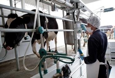 ordeño vacas