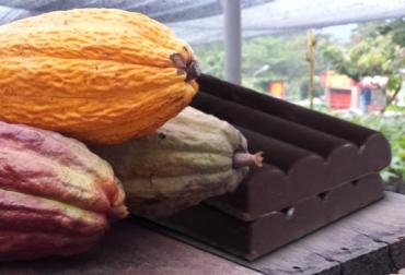 Producción de cacao en Colombia