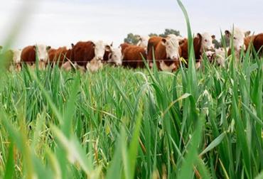 ganadería ecológica, ganadería sostenible, producción ganadera sostenible, ecoganadería, ecoganadería argentina, inta, inta argentina, producción sostenible, colombia, ganadería colombia, noticias ganaderas colombia, contexto ganadero