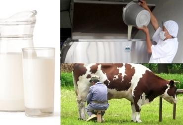 colanta leche
