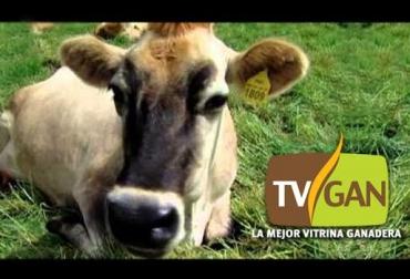 subasta de ganado
