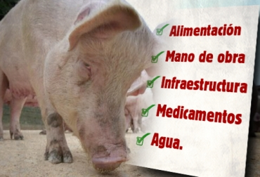 Alimentación cerdos
