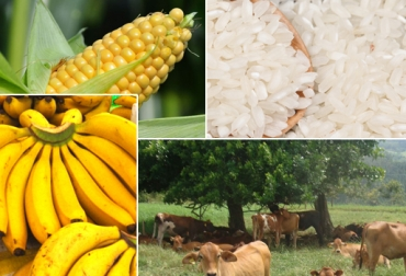 Seguro agropecuario Colombia
