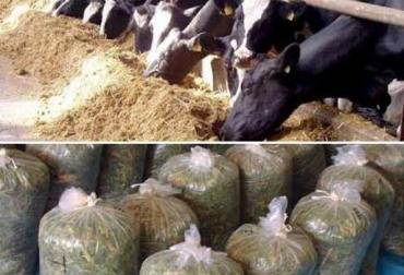 silos precios Colombia ganadería