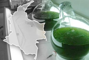 biocombustibles en Colombia, biocombustibles en Colombia colombia, biocombustibles en Colombia congelamiento precios, biocombustibles en Colombia cifras, contexto ganadero
