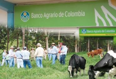 créditos, créditos para ganaderos, créditos banco agrario, dificultades créditos banco agrario, ganaderos colombia, ganadería colombia, contexto ganadero
