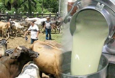 Leche importaciones 2017, Contratos de proveeduría, industria lechera, asoleche, lechería, leche en colombia, compra de leche, cruderos, ganadería colombia, contexto ganadero