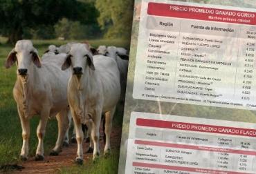 precio del ganado, precio del ganado en colombia, ganadería colombia, contexto ganadero, bolsa mercantil de colombia