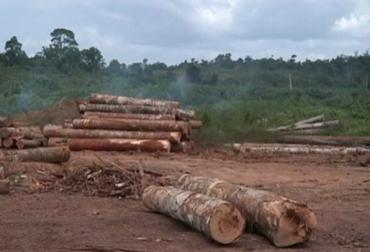 Ideam, deforestación en Colombia, deforestación en Colombia 2016, CONtexto ganadero, ganadería Colombia
