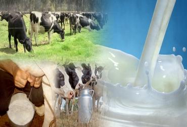 leche, crisis lechera, Precio Leche excedentaria, precio competitivo de exportación, críticas de los ganaderos al Ministerio de Agricultura, Ministerio de Agricultura Precio Competitivo Exportación Leche, Proyecto resolución adición 017 de 2012, leche, lechería, precio de la leche, Ministerio de Agricultura, lechería Colombia, CONtexto ganadero, ganaderos colombia