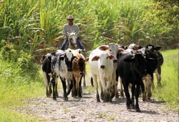 Fedegán, Iván Duque, Mensaje de Iván Duque a los ganaderos, CONtexto ganadero, ganadería Colombia, Noticias ganaderas Colombia