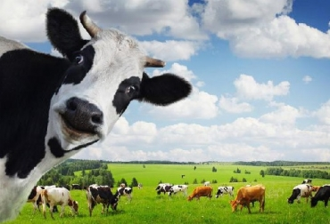 Gremios del sector lácteo se oponen a la firma de un TLC con Nueva Zelanda, Asoleche, Analac, Fedecoleche, Fedegan, CONtexto ganadero, ganadería Colombia, Noticias ganaderas Colombia
