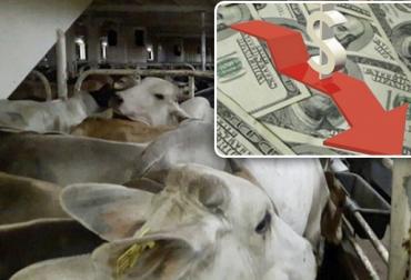 Exportaciones de carne bovina de Colombia en 2018, precio dólar Colombia, exportaciones de carne bovina, exportaciones de carne bovina en 2018, Expoganados Internacional, exportaciones de carne bovina por 16 millones de kilos, exportaciones a Jordania Libia Líbano Kuwait, CONtexto ganadero, ganadería Colombia, Noticias ganaderas Colombia