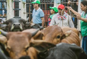 ganadería, ganadería colombia, noticias ganaderas, noticias ganaderas colombia, contexto ganadero, perú, carne colombiana a perú, ministerio de agricultura, exportaciones de carne, exportaciones de carne colombiana, carne colombia, juan guillermo zuluaga