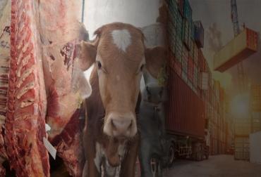Exportaciones de ganado en pie Colombia 2018, Exportaciones de carne bovina de Colombia en 2018, exportaciones ganado carne Colombia 2016 2018, histórico exportaciones de carne bovina y ganado de Colombia, exportaciones de carne bovina en 2018, exportaciones de carne bovina en julio 2018, exportaciones ganado Colombia, CONtexto ganadero, ganadería colombia, noticias ganaderas colombia