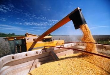 Colombia, Con investigación Colombia buscará la autosuficiencia en la producción de maíz, Agrosavia, Cimmyt, convenio Agrosavia-Cimmyt para producción de nuevas variedades de semillas y transferencia a agricultores, reducirán costos en la producción de maíz, sustituirán importaciones de maíz, contexto ganadero, noticias ganaderas, economía