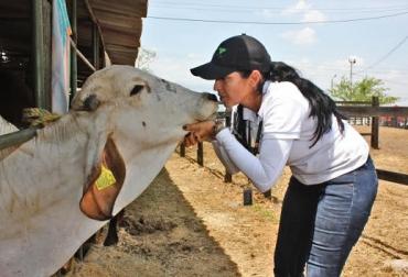 Colombia, ICA, Brucelosis y Tuberculosis Bovina, Programas Nacionales de Brucelosis y Tuberculosis Bovina,