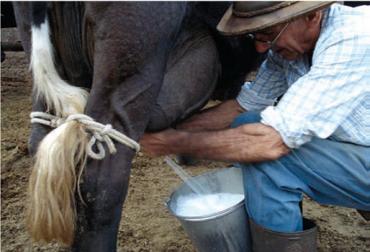 Precio de leche no responde a los altos incrementos de los costos, salario mínimo aumentó dos veces, precio de leche no responde al mercado, precios de leche frente a IPC, fertilizantes han subido seis veces el IPP, CONtexto ganadero, noticias de ganadería colombiana.