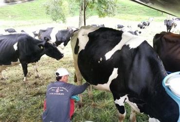 Colombia, leche, producción nacional de leche en 2018, acopio industrial de leche, doble propósito, lechería especializada, 5 imperfecciones estructurales de la cadena láctea colombiana, Contexto ganadero, noticias ganaderas, vacas