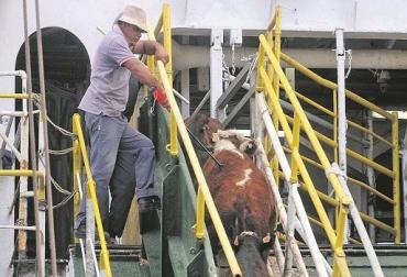 Jordania y Egipto son más costos para exportar, Líbano e Irak son menos costos para exportar, exportación de ganado en pie, ventajas comparativas, ventajas económicas, reducción de costos, Jordania y pruebas de Tuberculina y Brucelosis, suspensión de certificación OIE, CONtexto ganadero, noticias de ganadería colombiana.