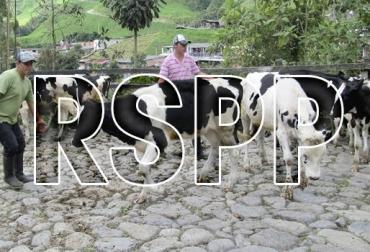ganadería, ganadería colombia, noticias ganadera colombia, contexto ganadero, , ganaderos, ganaderos Colombia, predios, documentos, tierras, registro, sanidad, registro sanitario de predio pecuario, pecuario, ica, instituto Colombia de agropecuaria, programas, requisitos