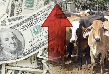 Tendencia alcista del precio del dólar, oportunidad de negocio, mejor precio al cliente internacional, pérdida del estatus, recuperar estatus, concretar negociaciones, Expoganados, CONtexto ganadero, noticias de ganadería colombiana.
