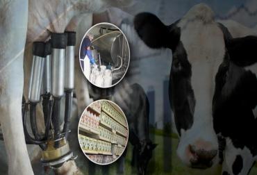 ganaderia, ganaderia colombia, ganaderia colombiana, contexto ganadero, noticias ganaderas, noticias ganaderas colombia, leche, futuro leche colombia, avances leche colombia, importaciones leche colombia, exportacion leche colombia, tratados libre comercio estados unidos, tratados libre comercio union europea, leche, leche en polvo, contingentes de leche, productores de leche, consumidores de leche, comercializacion leche, acopio leche, ganaderos, ganaderos colombia