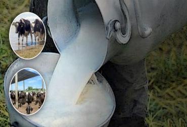Producción similar de leche, producción equilibrada de leche, producción de leche igual en el año, leche mismo nivel, Producción de leche en Colombia, acopio de leche en colombia, planeación forrajera, conservación de forrajes, ganadería en colombia, producción lechera en Colombia, leche Colombia, leche, mantener leche, mantener producción de leche, producción leche mismo nivel, CONtexto ganadero, ganaderos colombia, noticias ganaderas colombia