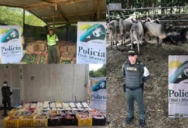 ICA, CIIIP, incautación, zona de frontera, CONtexto ganadero, noticias ganaderas de Colombia, bovino