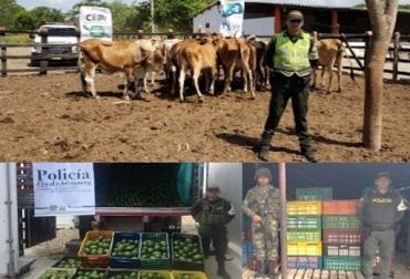 Colombia, ganadería, Centro Integrado ICA, INVIMA, POLFA/DIAN (CIIIP), contrabando, productos perecederos, semovientes, queso, leche, azúcar, maíz, yuca, carne en canal, aguacates, La Guajira,  Polfa, ICA, Deyanira Barrero León, CONtexto ganadero, economía