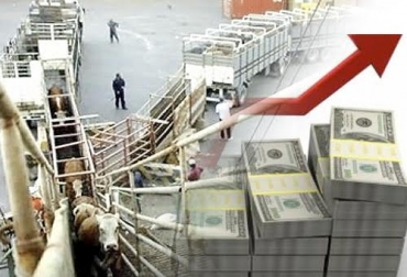Exportar 25.000 bovinos vivos más en el 2019, Expoganados Internacional S.A.S., efecto precio dólar, tendencia alcista TRM, promoción de exportaciones, dinamismo de exportaciones, ganado vivo a Irak y Líbano, CONtexto ganadero, noticias de ganadería colombiana.