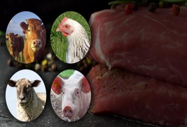 Producción mundial de carne, carne vacuna, carne bovina, producción de carne aumenta, Oficina Permanente Internacional de la Carne, International Meat Secretariat, IMS, OPIC, producción carne 2019, campaña negativa carne, consumo de carne en el mundo, carne mundo, ganadería, carne de res, CONtexto ganadero, ganaderos Colombia, noticias ganaderas Colombia