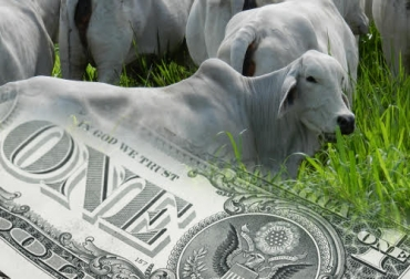 tasa de cambio, Costos de Producción, insumos, medicamentos, salario mínimo, diésel, CONtexto ganadero, ganaderos Colombia, noticias ganaderas Colombia