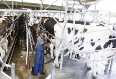 Ahorrar gastos en tiempos de coronavirus, producción de leche coronavirus, recomendaciones para ahorrar al producir leche en la cuarentena, acopio leche, pautas para acopio de leche, recolección de leche en fincas, recomendaciones para acopiar leche, Calidad leche Colombia, productores leche, coronavirus, COVID-19, cuarentena, Ganadería, ganadería colombia, noticias ganaderas, noticias ganaderas colombia, CONtexto ganadero
