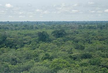 deforestación, reforestación, Agua, MinAmbiente, IDEAM, alerta, región Amazónica, Guaviare, caquetá, Meta, AMBIENTE, emprendimiento, monitoreo, Ganadería, ganadería colombia, noticias ganaderas colombia, CONtexto ganadero