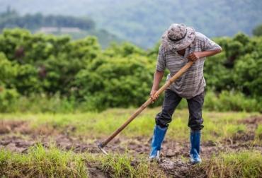 Ganadería, ganadería colombia, noticias ganaderas, noticias ganaderas colombia, CONtexto ganadero, Ministerio de Agricultura a través de la Resolución 169 de 2020, Resolución 169 de 2020 insumos agropecuarios, auxilio para insumos, COVID-19, precio de los insumos 2020, Ministerio de Agricultura, beneficios resolución 169 ministerio de agricultura