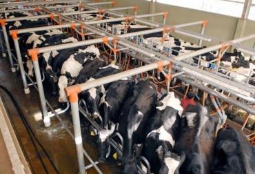 Ganadería, ganadería colombia, noticias ganaderas, noticias ganaderas colombia, CONtexto ganadero, leche, panorama leche, panorama de la leche en latinoamérica, Fepale, proyecciones fepale, fepale 2020, proyecciones fepale 2020, comportamiento leche 2020, producción leche latinoamérica