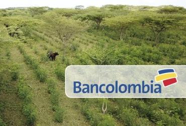 Bancolombia, crédito, Ganadería Sostenible, sector agropecuario, Medio Ambiente, Sistemas silvopastoriles, tasas de interés, bancos de forraje, insumos, ensilaje, pastos, árboles, arbustos, Ganadería, ganadería colombia, noticias ganaderas colombia, CONtexto ganadero
