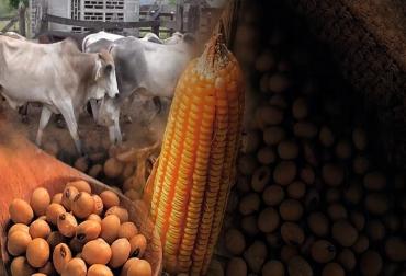 Maíz, soya, Agricultura por Contrato, SOYA MAÍZ: Proyecto País, rueda de negocios febrero 24 Monteria, ganadería, noticias ganaderas, CONtexto ganadero