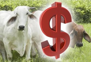 Ganadería, ganadería colombia, noticias ganaderas, noticias ganaderas colombia, CONtexto ganadero, precio del ganado, precio del ganado en colombia, aumento del precio del ganado, subastas, subastas de colombia, Asosubastas, johana fernández arroyo