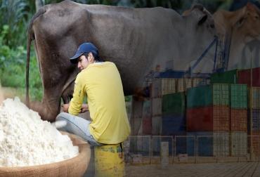 Importaciones lácteos 2012-2021, importaciones leche Colombia, importaciones lácteos colombia 2012-2021, importaciones leche polvo Colombia 2021, importaciones lácteos colombia noticias, cifras importaciones lácteos colombia, importaciones leche colombia industria, importaciones de leche en polvo colombia, ganado bovino, ganadería bovina, leche, lechería, lácteos, ganaderos, ganaderos colombia, ganado, vacas, vacas Colombia, bovinos, Ganadería, ganadería colombia, noticias ganaderas, noticias ganaderas colo